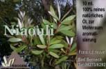 Niaouliöl 10 ml